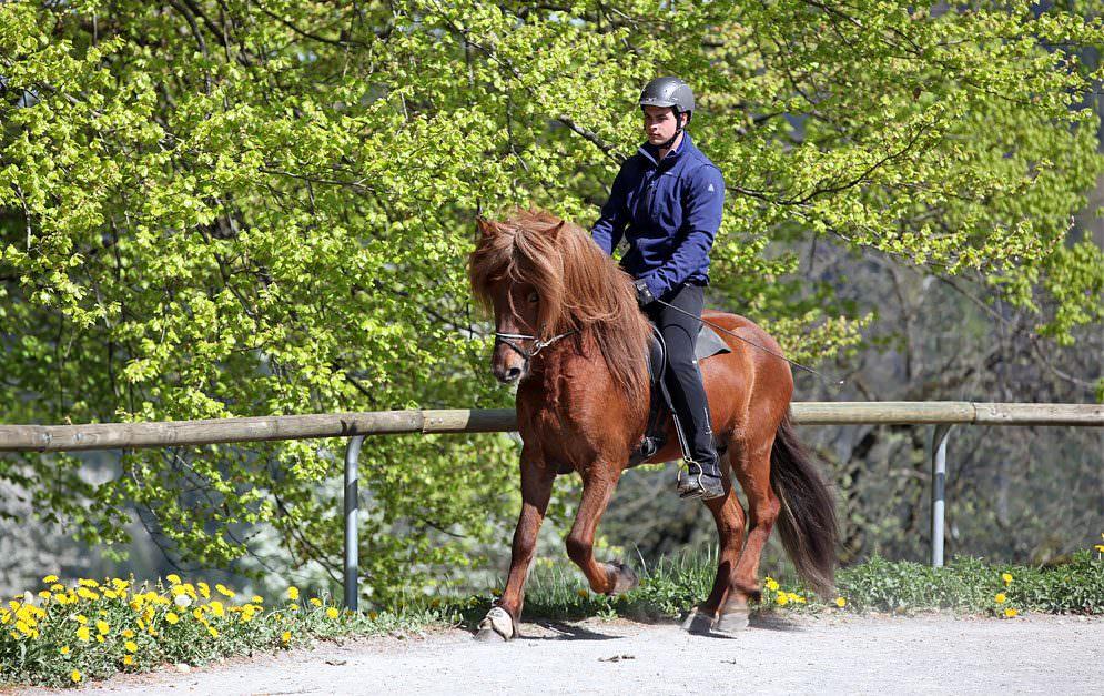 Für den Eigentümer des Pferdes ist die Reitbeteiligung oftmals eine zeitliche und/oder auch finanzielle Entlastung, doch hier sind rechtliche Regelungen gefragt, falls etwas passiert.
