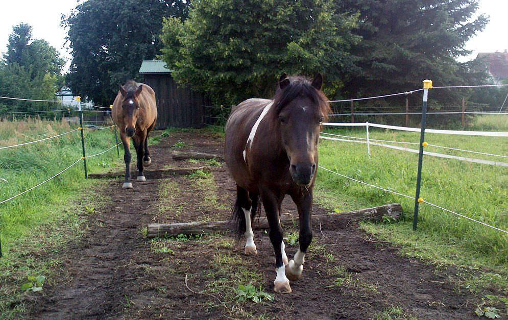"""Die ersten Bewohner sind inzwischen in den Paddock Trail eingezogen. Ein Warmblutwallach und ein Lewitzer haben den Track in kürzester Zeit """"erobert""""."""