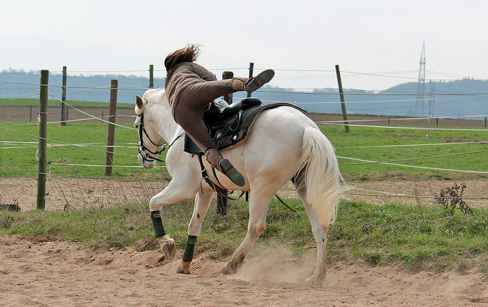 Das sprechende Pferd Mr. Ed oder den schwarze Flitzer Fury - Schon seit fast 100 Jahren gibt es Pferde beim Film. Welche Voraussetzungen sie mitbringen müssen und wie sie ausgebildet werden, das siehst du hier.