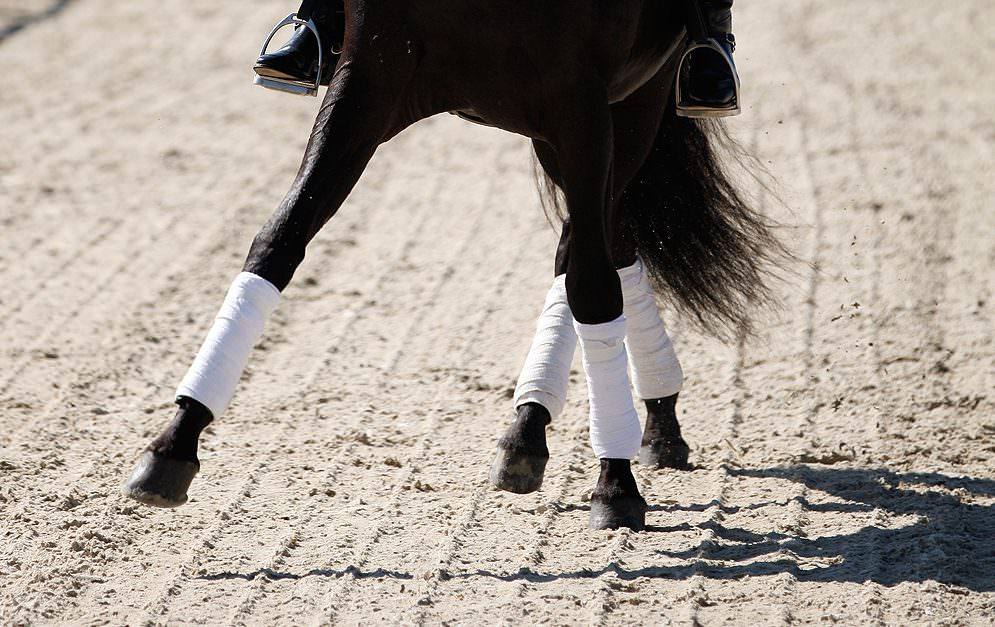 Die Traversale ist eine Vorwärts-Seitwärts-Bewegung, die entlang einer gedachten diagonalen Linie parallel zur langen Seite geritten wird.