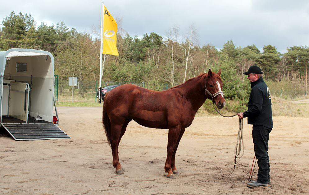 Um ein Pferd dazu zu bringen, freiwillig in einen Anhänger zu steigen, muss man zu allererst verstehen, was es für das Tier bedeutet, wenn es von der Herde getrennt allein in eine dunkle unbekannte Box steigen soll.
