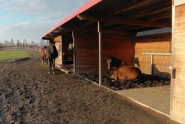 """Es gibt viele Möglichkeiten den Stall einzustreuen. Die bekanntesten sind Stroh und Späne. Lese mehr über den """"Waldboden"""" als Einstreu für Pferde."""