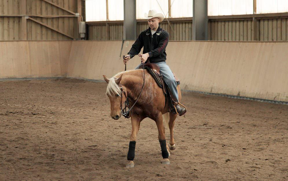 Westerntraining mit Felix Schnabel - So stellst du dein Pferd von beidhändiger Zügelführung auf Einhändige um.