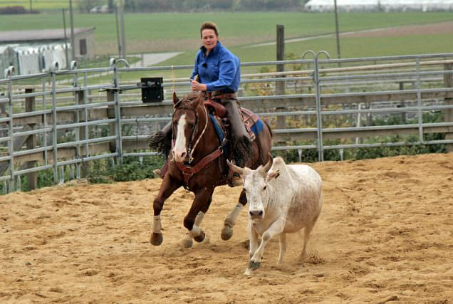 Aufgewirbelter Sandboden, Rinder, rasanter Galopp und spontane Stopps – das ist Working Cowhorse.