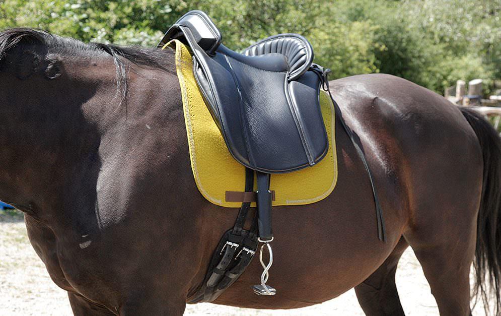 Ob Springen, Dressur, Vielseitigkeit, Western- oder Wanderreiten - einen passenden Sattel für sein Pferd zu finden ist keine leichte Aufgabe.