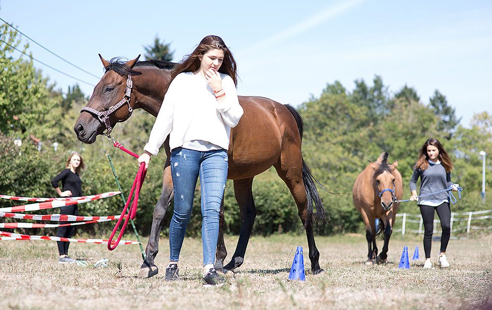 Auch Menschen, die in ihrer Freizeit nichts mit Pferden zu tun haben, können durch spezielles Coaching ihre Wirkung auf Mitmenschen überprüfen.