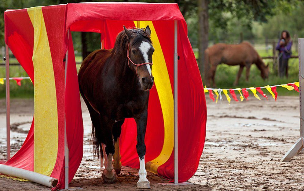 Freestyle Horse Agility