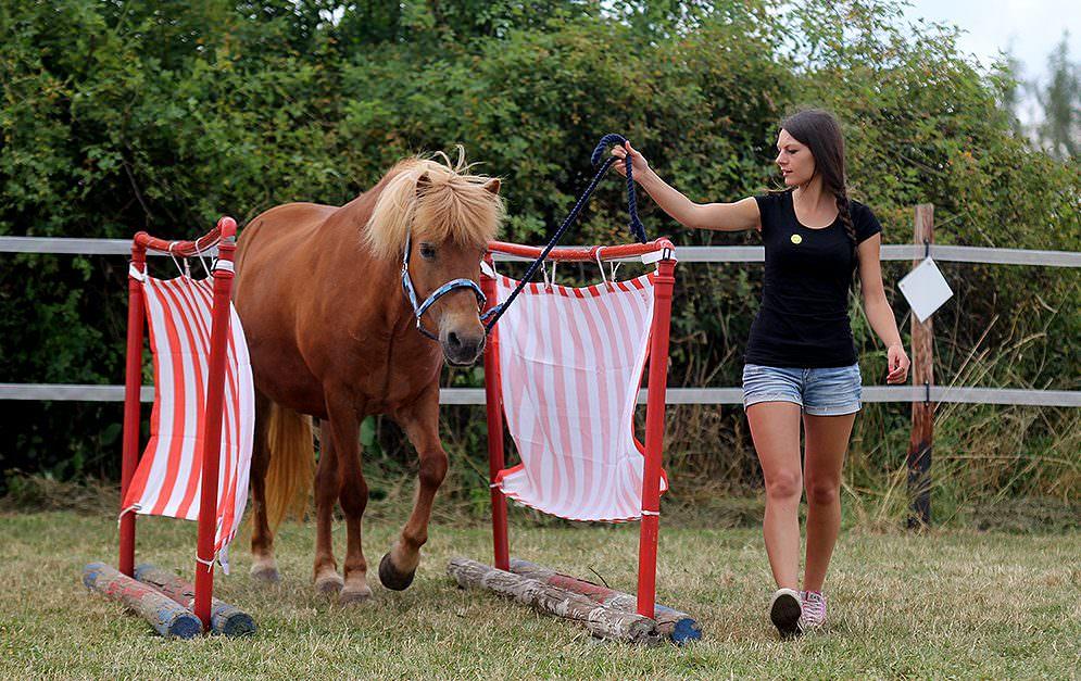 HorseAgility HoheGasse Bauanleitung Header