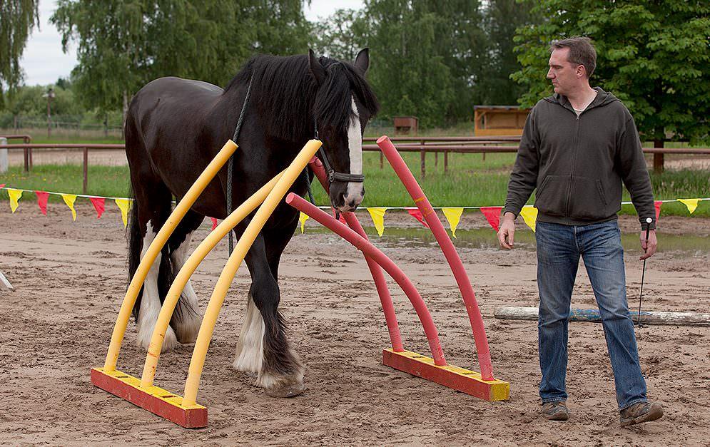 HorseAgility Nudelgasse Header Bauanleitung
