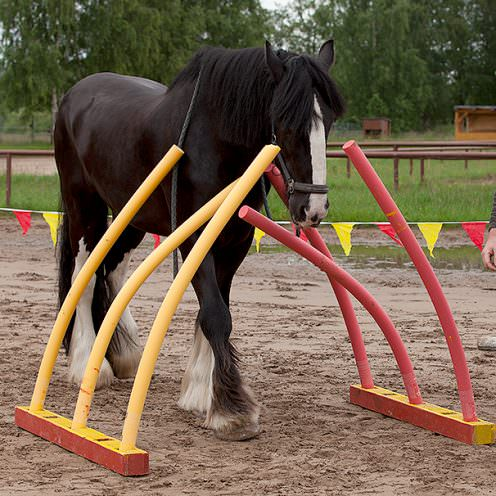 Freestyle Horse Agility Bauanleitung Wippe Pferdemagazin