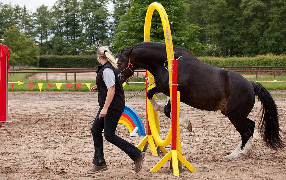 HorseAgility Reifensprung Bauanleitung Header