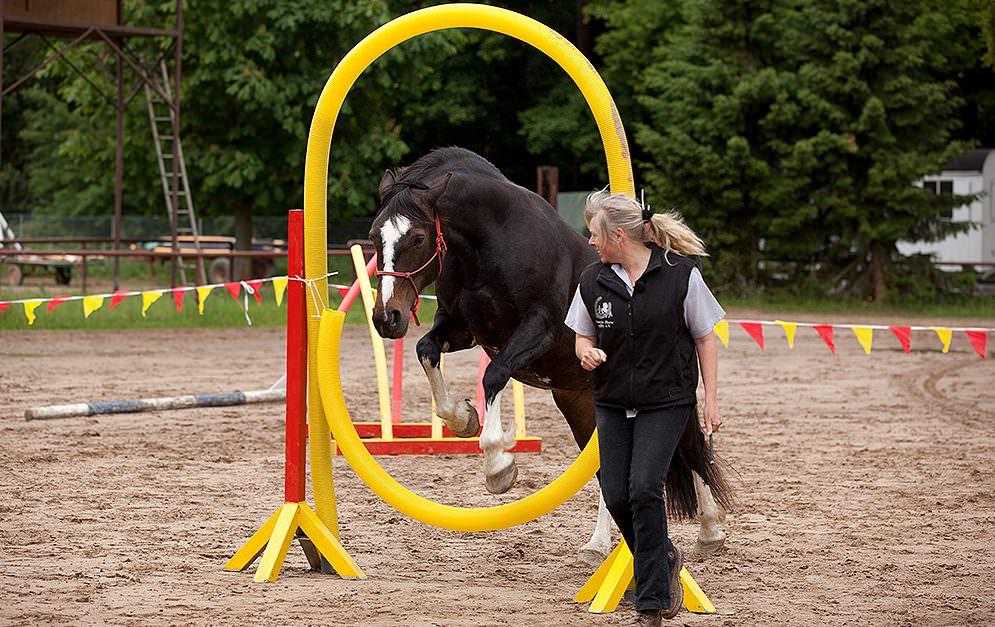 HorseAgility Reifensprung Header