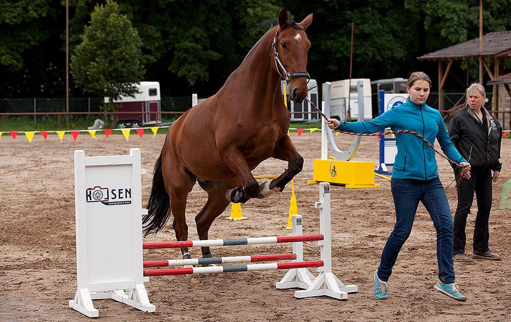 HorseAgility Sprung Header