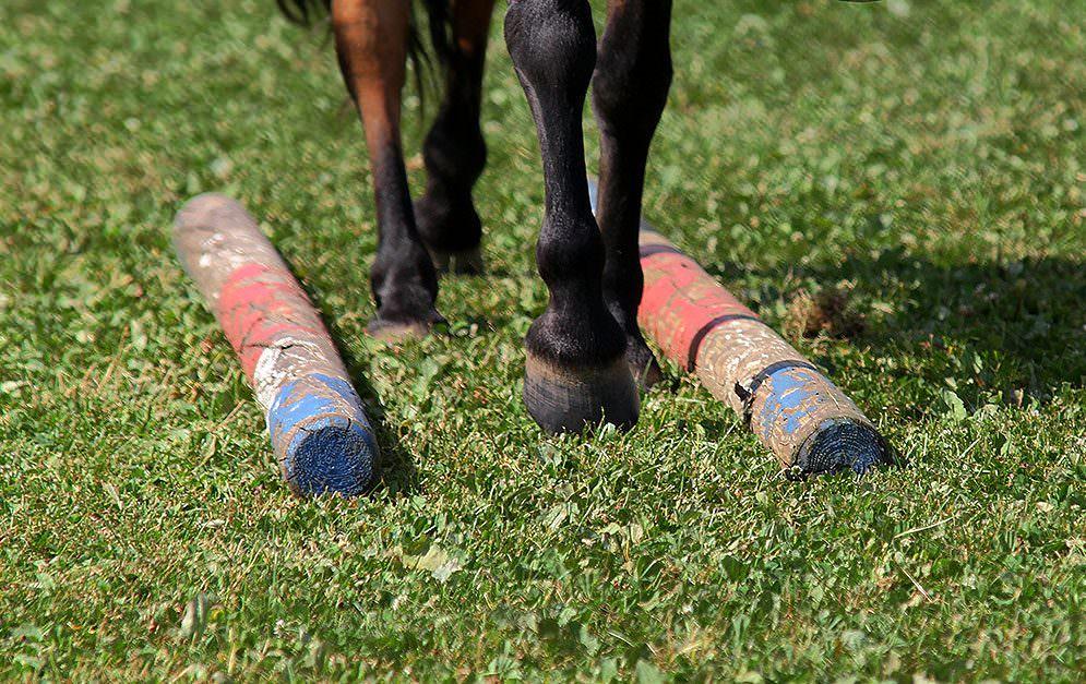 HorseAgility Stangengasse Header