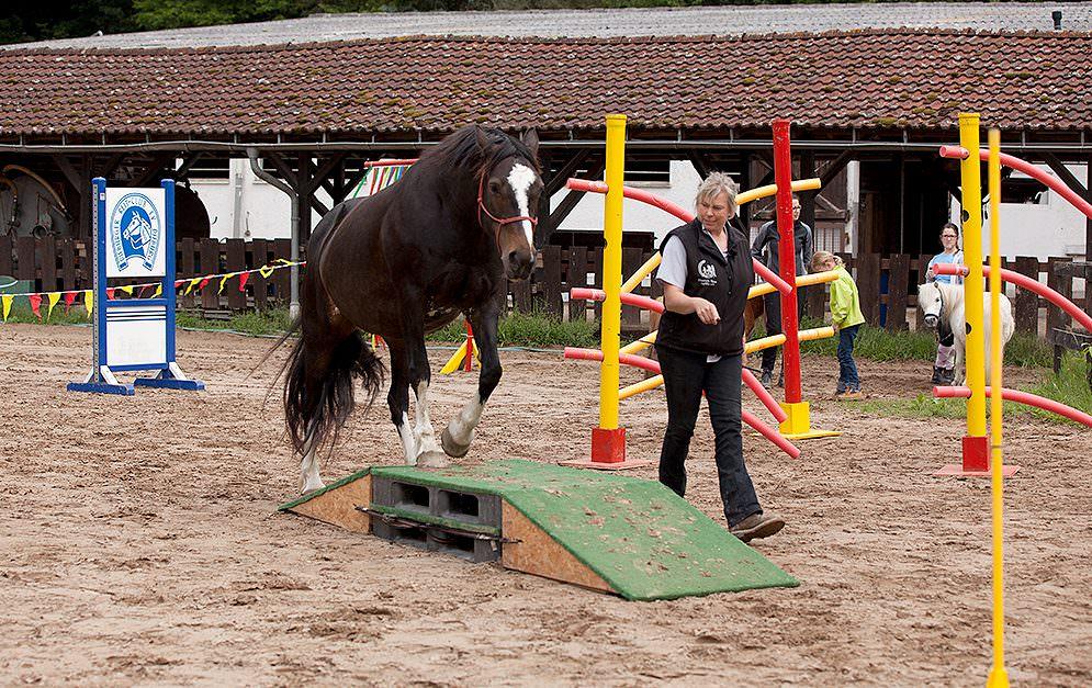 HorseAgility Steg Header
