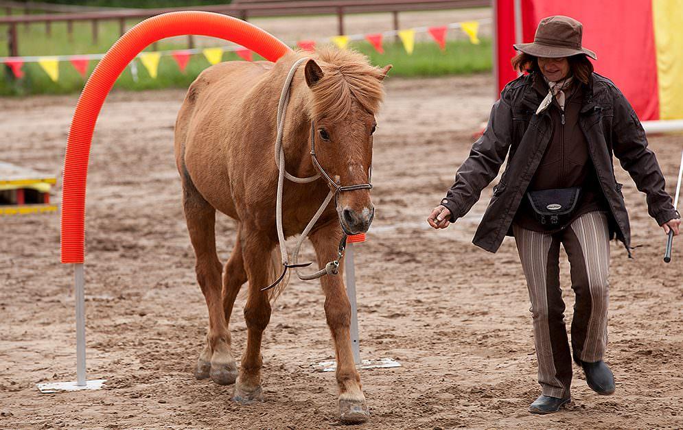 HorseAgility Torbogen Bauanleitung Header