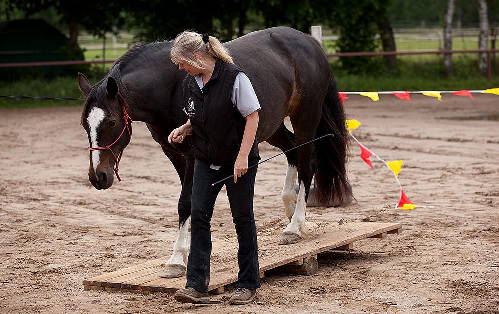 HorseAgility Wippe Header Bauanleitung