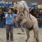 Karin Tillisch mit ihrem Quarter Pony.