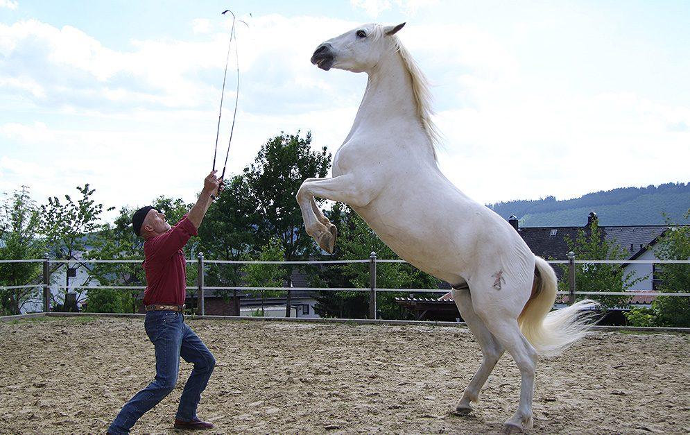 Peter Pfister arbeitet zum ersten Mal mit den beiden jungen Pferden Justi und Alegre gemeinsam - wie werden sie reagieren?