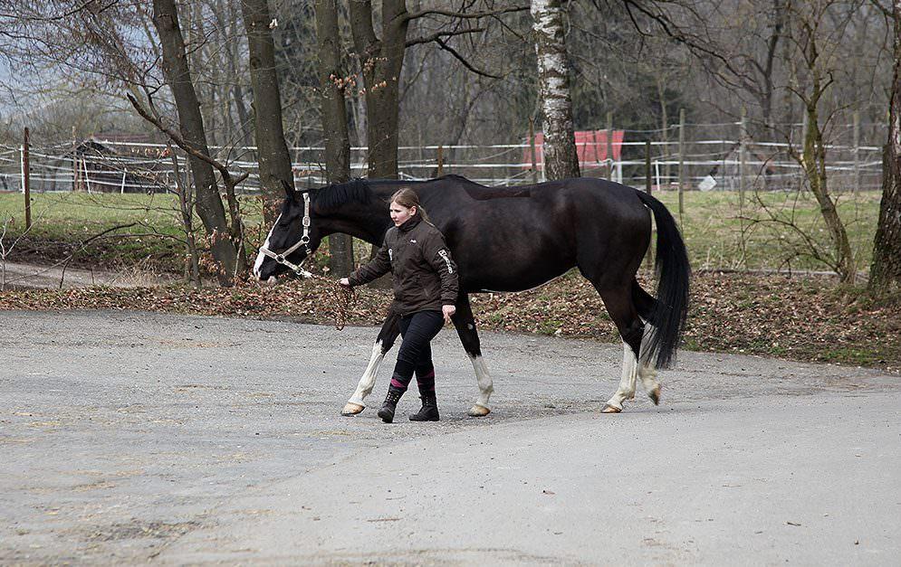 Von der Pferdesuche bis zur Unterzeichnung des Kaufvertrages ist es ein langer Weg. Denn im Idealfall ist der Pferdekauf gut durchdacht und überlegt.