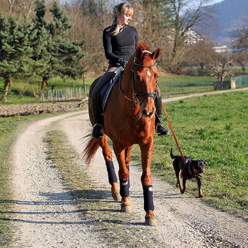 Um der Bewegung von beiden Tieren gerecht zu werden, nehmen einige Reiter ihren Hund gerne mit auf Ausritte. In diesem Zusammenhang gibt es einige rechtliche Dinge, auf die wir näher eingehen.
