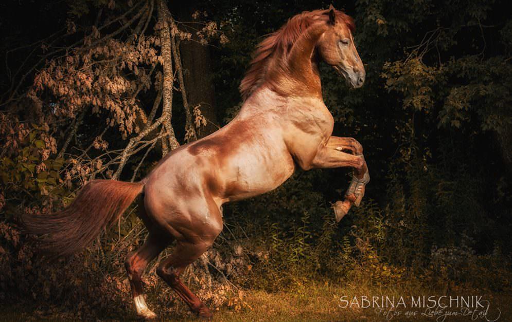 Sabrina Mischnik ist eine junge Nachwuchsfotografin, die versucht die Unberührtheit der Natur, mit der Kraft der Pferde in einem Bild zu vereinen.