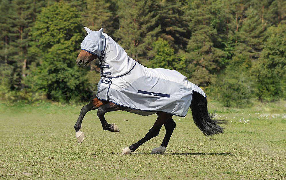 Viele Pferdebesitzer fragen sich, welche Decke am besten vor Insekten schützt, langlebig ist und dabei noch möglichst preisgünstig ist.