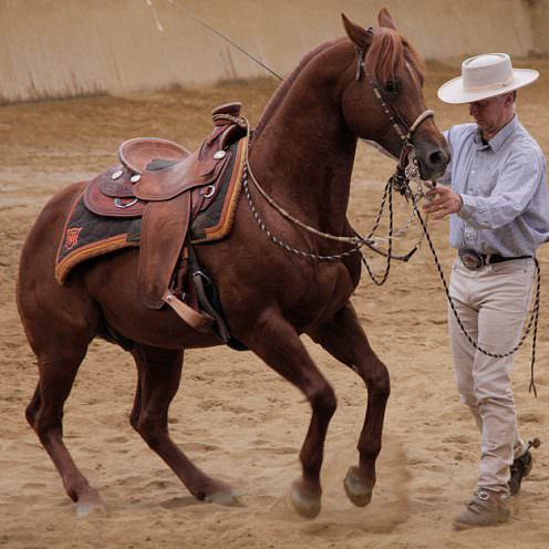 Jeder kennt im größeren Bekanntenkreis den ein oder anderen Reiter, der sich zwar sehr gut um seinen Vierbeiner kümmert, aber kaum Wert auf korrekte Gymnastizierung legt.