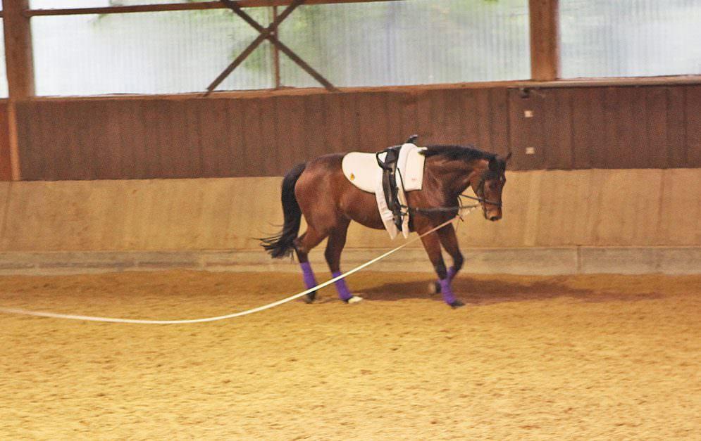 Ein gutes Voltigierpferd ist Gold wert. Wir zeigen dir, welche Anforderungen an ein Voltigierpferd gestellt werden und wie es sie meistern kann.