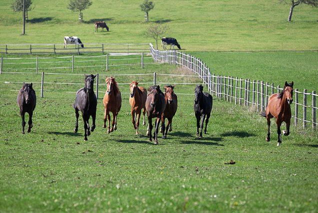 Das Frühjahr ist die beste Zeit zum Handeln, um die Pferdeweide für die kommende Saison vorzubereiten und das Gräser- und Kräuterwachstum zu unterstützen.