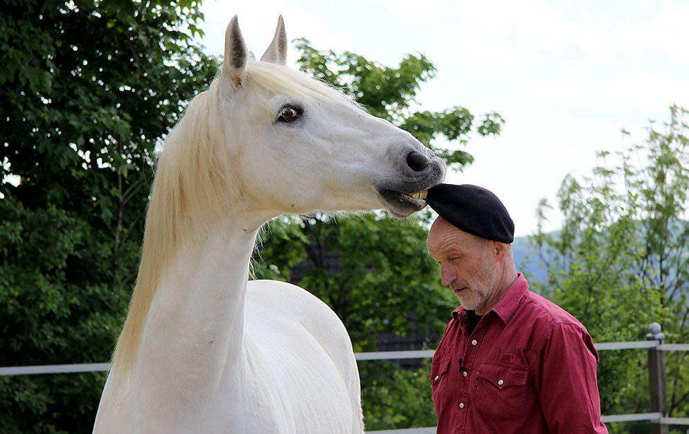 Das Apportieren ist eine Lektion, die den Pferden vor allem Spaß machen soll und Abwechslung in das alltägliche Training bringt.