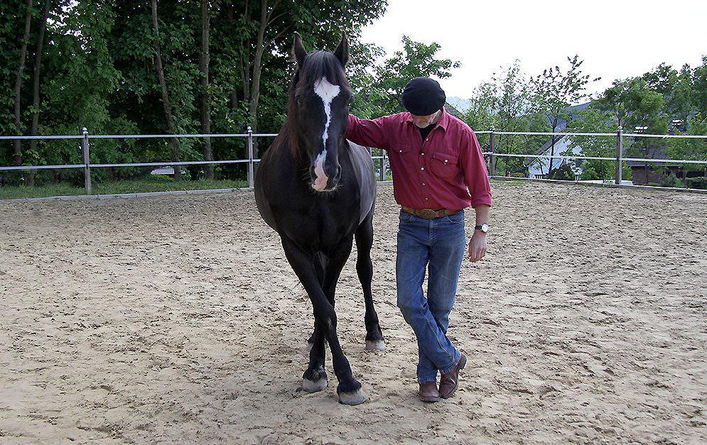 Wie der Name schon verrät, bringt man dem Pferd bei dieser Übung bei, ein Vorderbein vor dem anderen zu kreuzen.