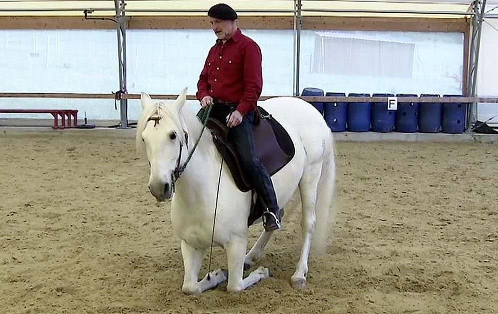 """Das Knien unter dem Reiter ist Thema unserer """"Zirkuslektionen lernen"""" - Serie. Zirkuslektionen-Profi Peter Pfister verrät, wie er beim Erarbeiten dieser Übung vorgeht."""