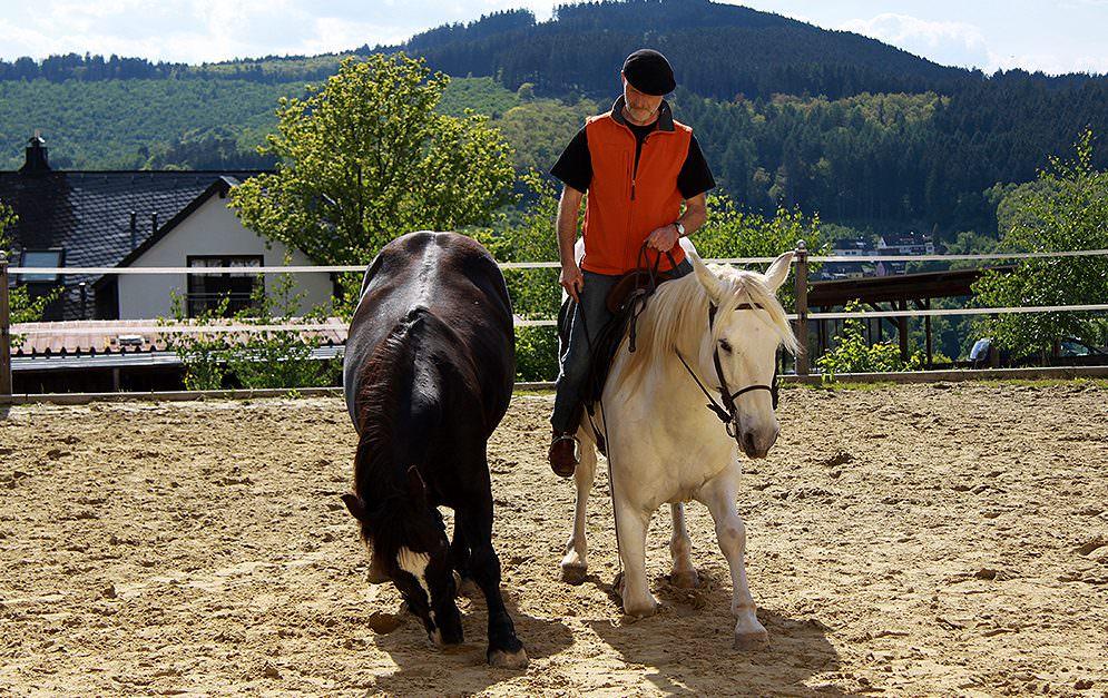Das Kompliment ist eine der bekanntesten zirzensischen Lektionen bei Pferden. Eine Erweiterung dieser Übung ist das Kompliment unter dem Reiter. Peter Pfister verrät, wie er beim Erarbeiten dieser Zirkusübung vorgeht.