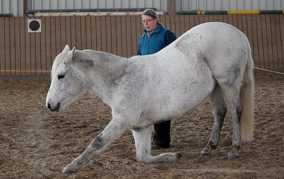 Die Lektion Kompliment ist sehr beliebt, nicht zuletzt weil sie eine gymnastizierende Wirkung beim Pferd hat.