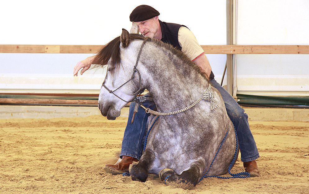Das Liegen unter dem Reiter ist eine Lektion, die aus dem Knien erarbeitet wird. Peter Pfister gibt dir die nötigen Hilfestellungen und zeigt, wie du die Lektion Schritt für Schritt erarbeiten kannst.