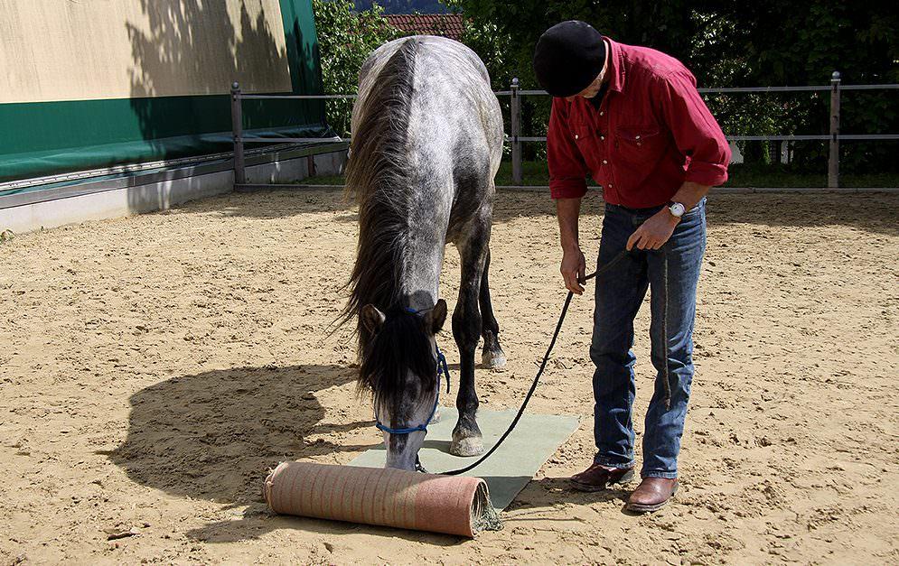 Das Trainingskonzept des Teppich Ausrollens basiert auf einem einfachen Trick. Ein Teppich wird mit Leckerlis präpariert und eingerollt.