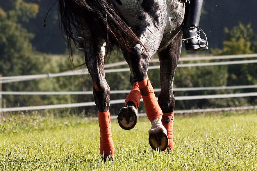 Rückwärtsrichten: Bei dieser Aufgabe muss das Zusammenspiel zwischen Pferd, Reiter und den Hilfen des Reiters passen und aufeinander abgestimmt sein.