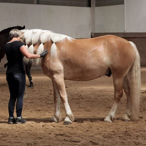 Arien Aguilar - Arbeiten mit Problempferden. Verschieben der Vor- und Hinterhand des Pferdes.