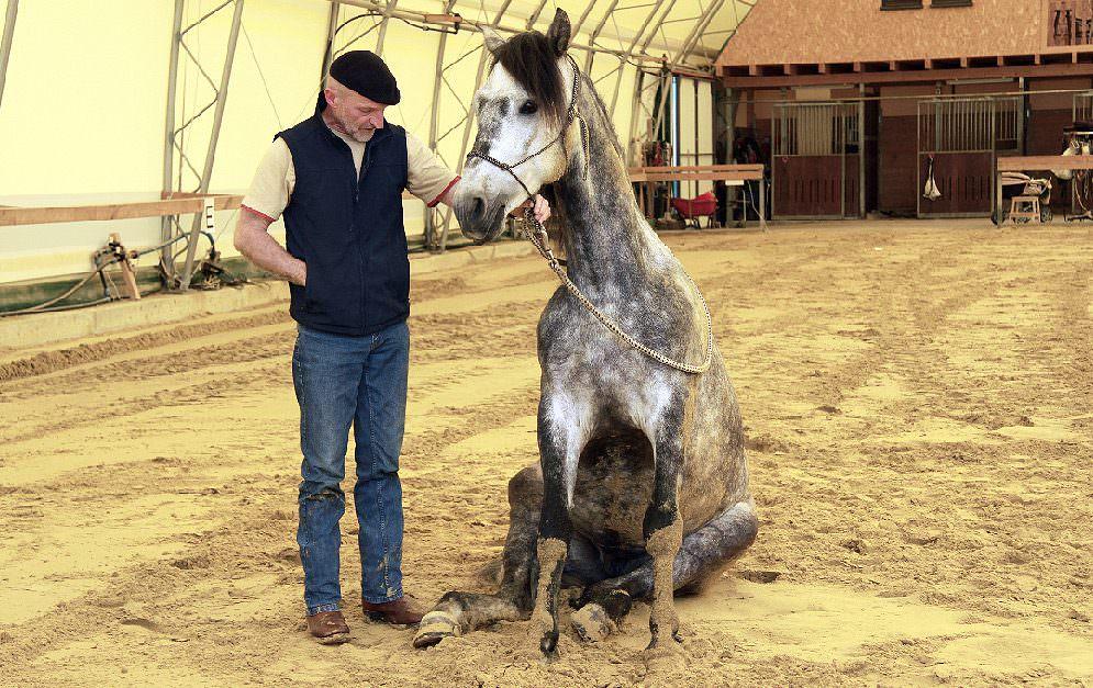 """Im dritten Teil unserer """"Zirkuslektionen lernen"""" - Serie erarbeiten wir gemeinsam mit Tierärztin und Trainerin Christine Konrad die Übung """"das Sitzen""""."""
