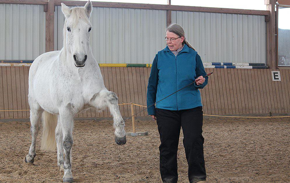 Wir zeigen dir wie man die beeindruckende Lektion mithilfe von Vorübungen, wie dem Spanischen Gruß und der so genannten Polka, dem Pferd beibringen kann.