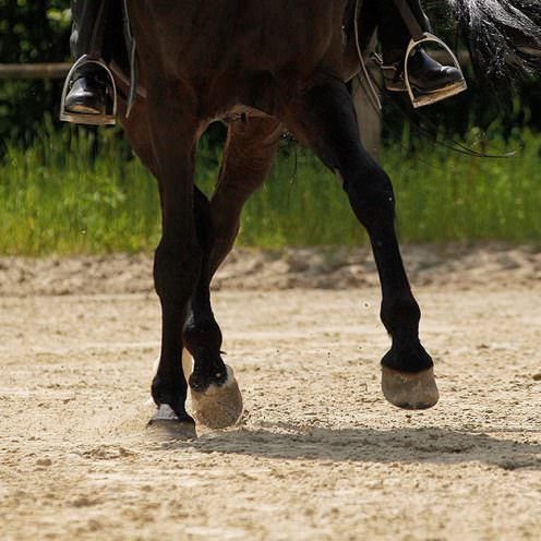 Trainiere in dieser schnell aufgebauten Reitübung flüssige Seitwärtsbewegungen und verbessere die Traversale.