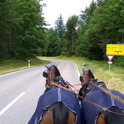 2 Frauen haben sich auf die Reise gemacht und sind mit der Kutsche zur Eurocheval gefahren. In ihrem Blog berichten sie, wie es ihnen während der Reise ergangen ist.
