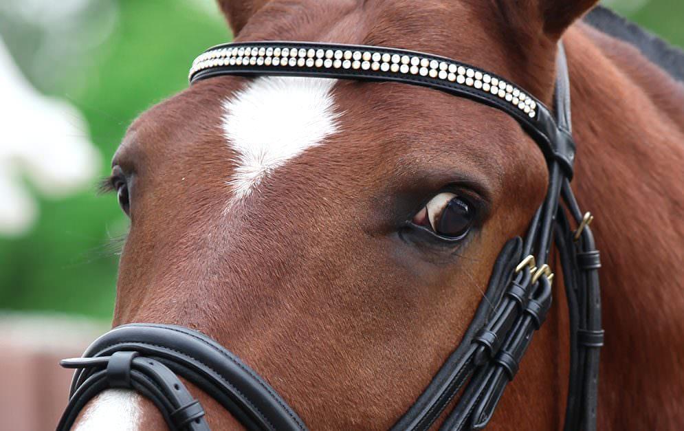 Die Augen gelten als Spiegel der Seele - und sollen uns Menschen zeigen, was in Pferden vorgeht.