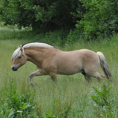 Langes Gras auf der Pferdeweide – wo gibt es das noch?