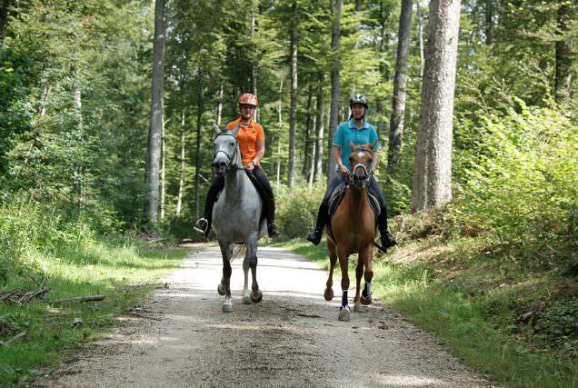 Distanzreiten ist ein Ausdauersport mit dem Pferd in der Natur - und hat trotzdem so viel mehr zu bieten.