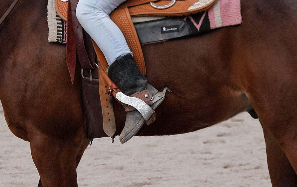 Wenn Pferde faul sind, liegt es oft nicht am Pferd, sondern an äußeren Einflüssen oder sogar der Gesundheit.