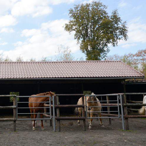 Neben dem Koppen ist das Weben eine weit verbreitete Verhaltensstörung. Oft haben die Pferde zu wenig Bewegung und kompensieren dies.