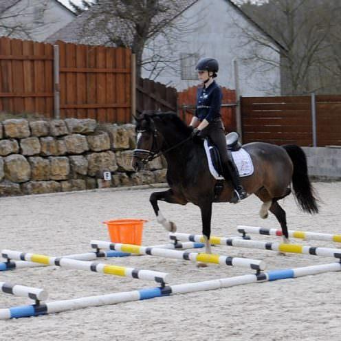 Viele Reiter gymnastizieren ihre Pferde gerne mit niedrigen Hindernissen bzw. Cavaletti. Hierbei bieten die WingX neue Möglichkeiten.