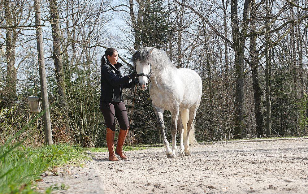 Seitengänge kann man dem Pferd auch vom Boden beibringen - für's Pferd ist das auf jeden Fall von Vorteil.